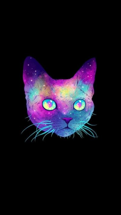 Cool Cat Wallpapers - Top Free Cool Cat Backgrounds - WallpaperAccess