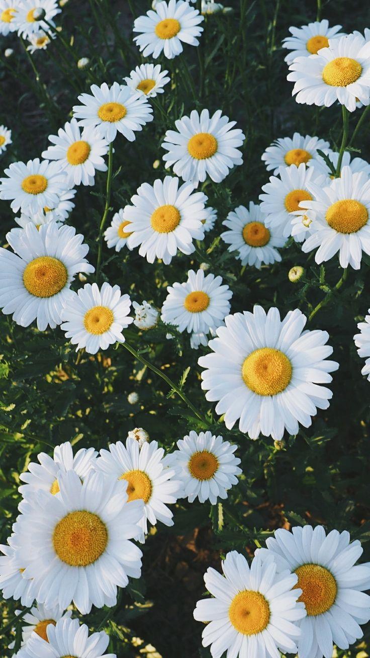 Iphone 5 Wallpaper Floral Phone Amp Celular Wallpaper ☆彡 Pinterest Noriene