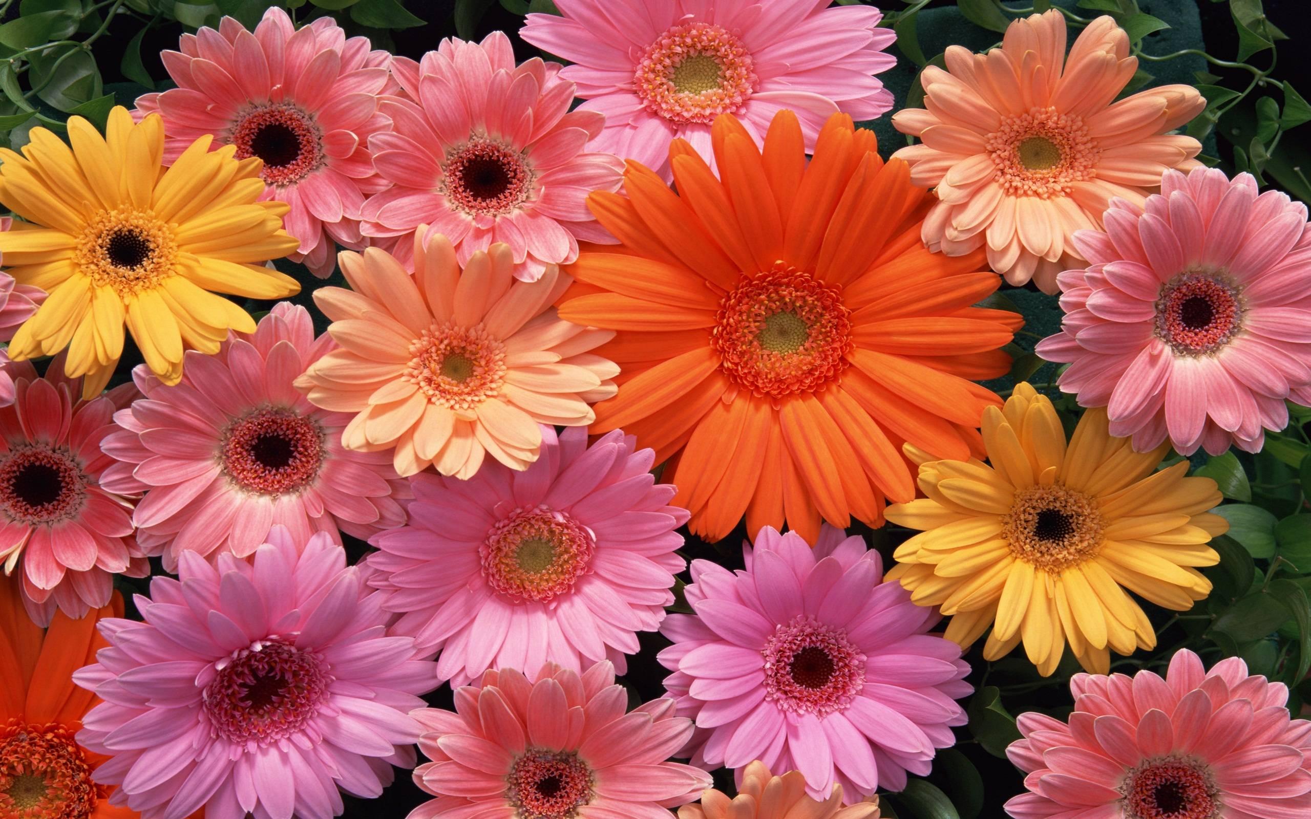 Beautiful flower best hd wallpaper free 8573 wallpaper computer