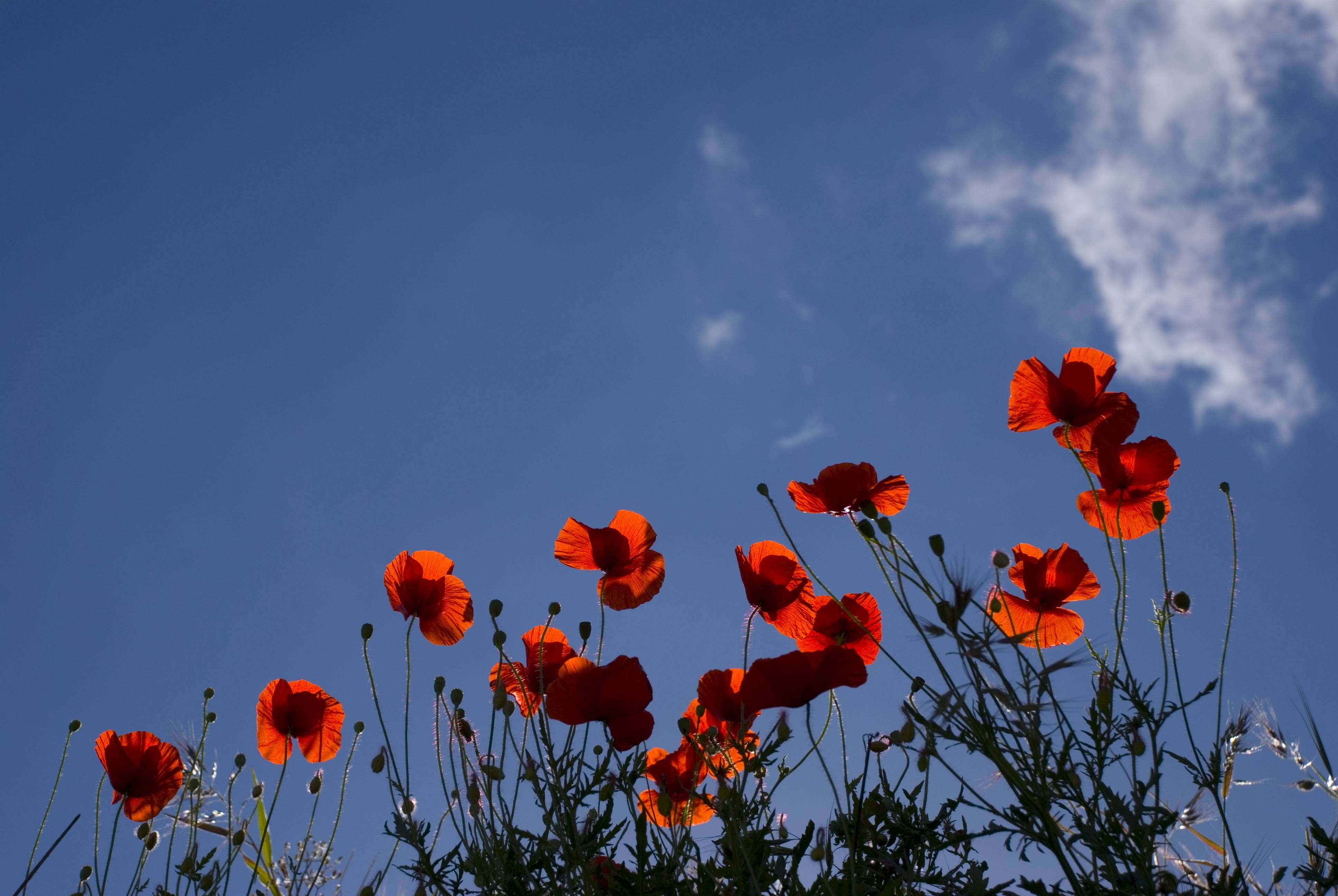 Geography Hd Wallpaper Remembrance Day Wallpapers Wallpaper Cave