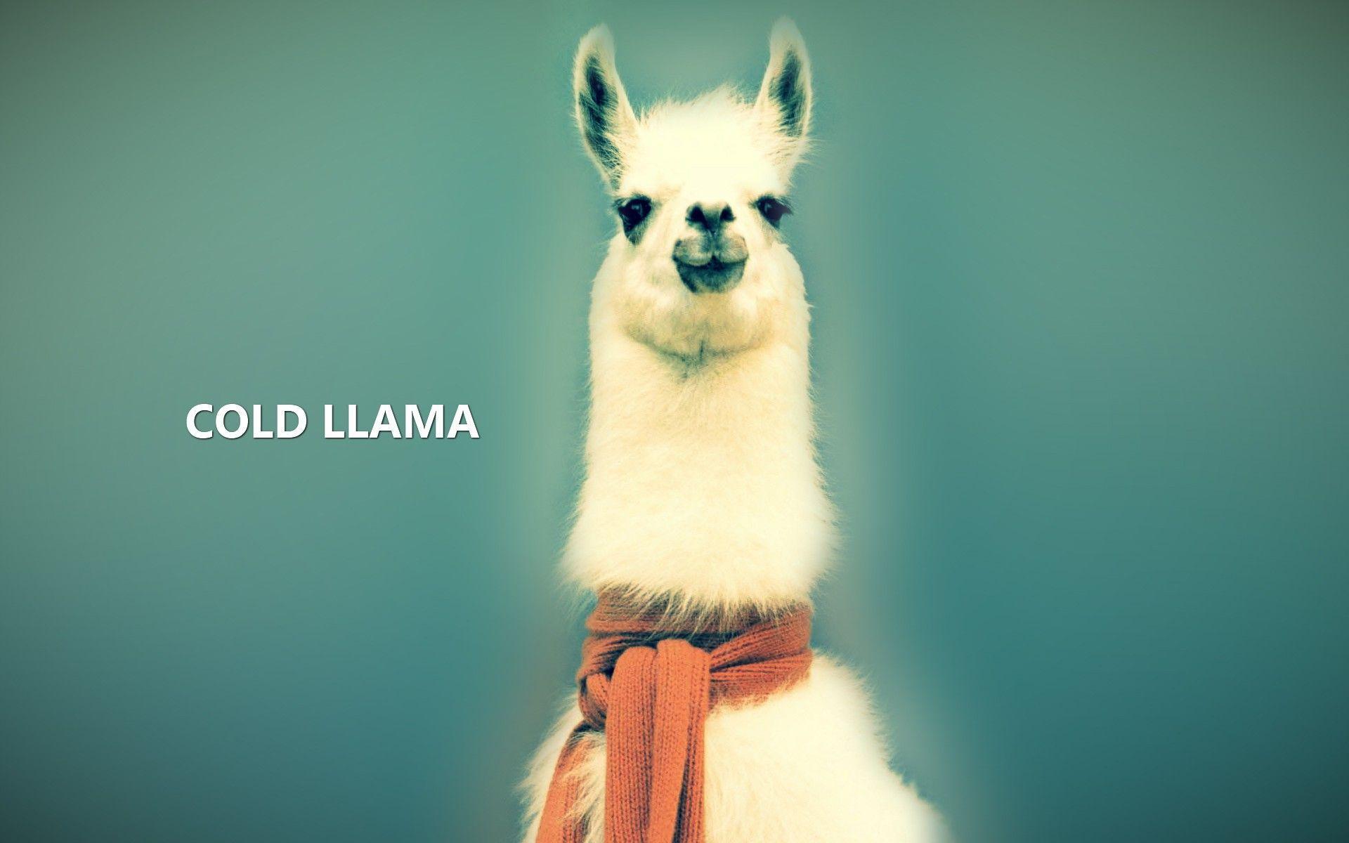 Cute Llama Wallpaper Desktop Llama Backgrounds Wallpaper Cave