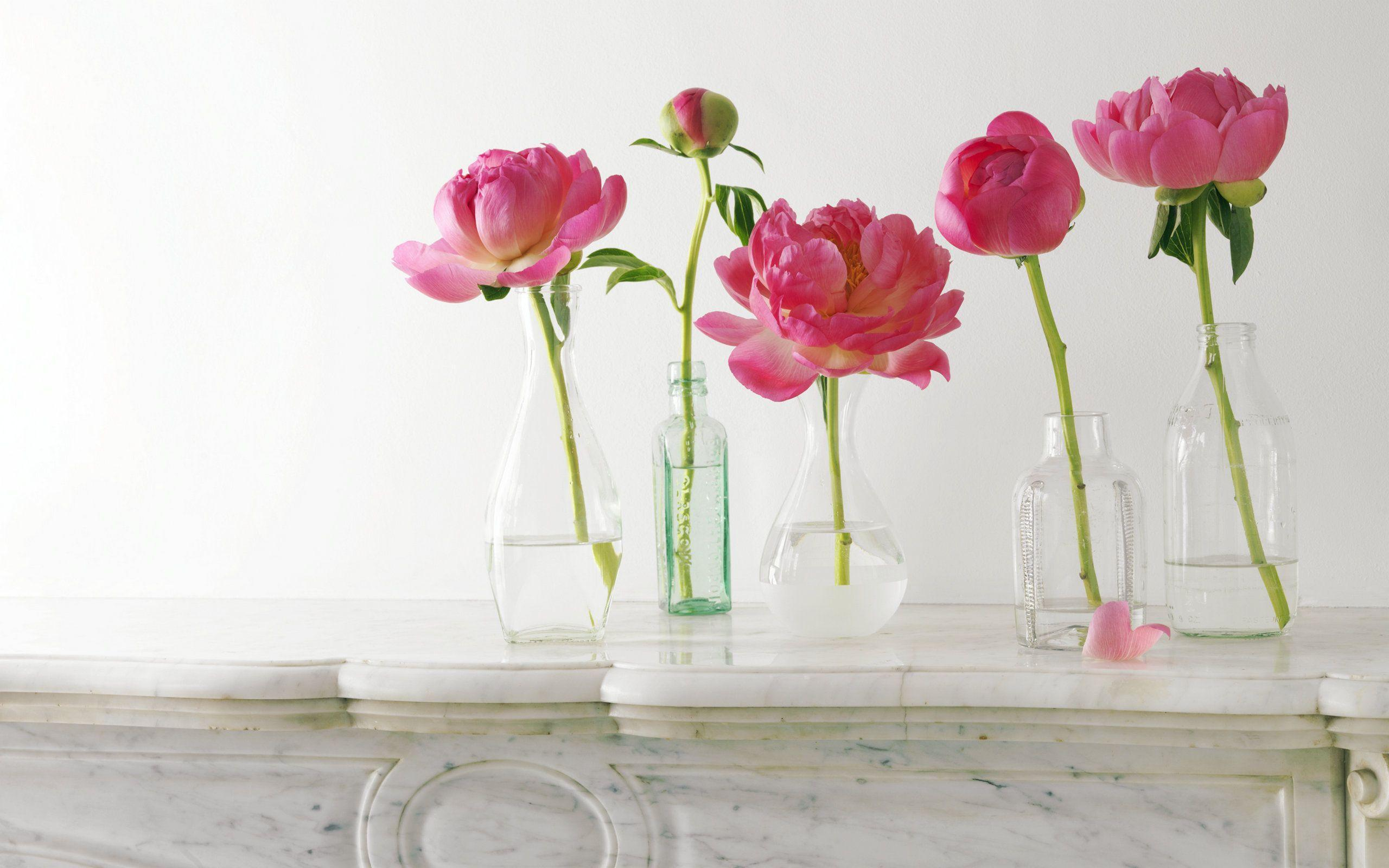 One Flower Vases Peony Wallpapers Wallpaper Cave