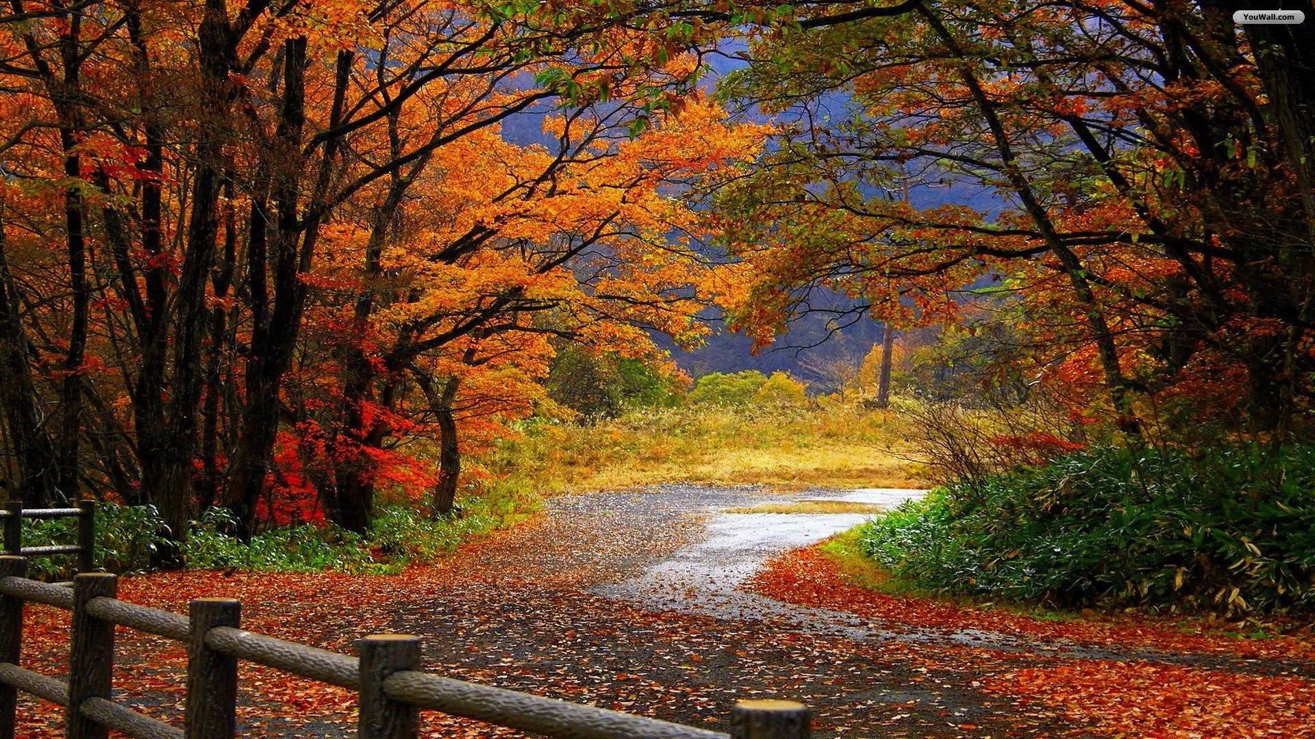 Scenary Wallpaper Fall Scenery Wallpapers Wallpaper Cave