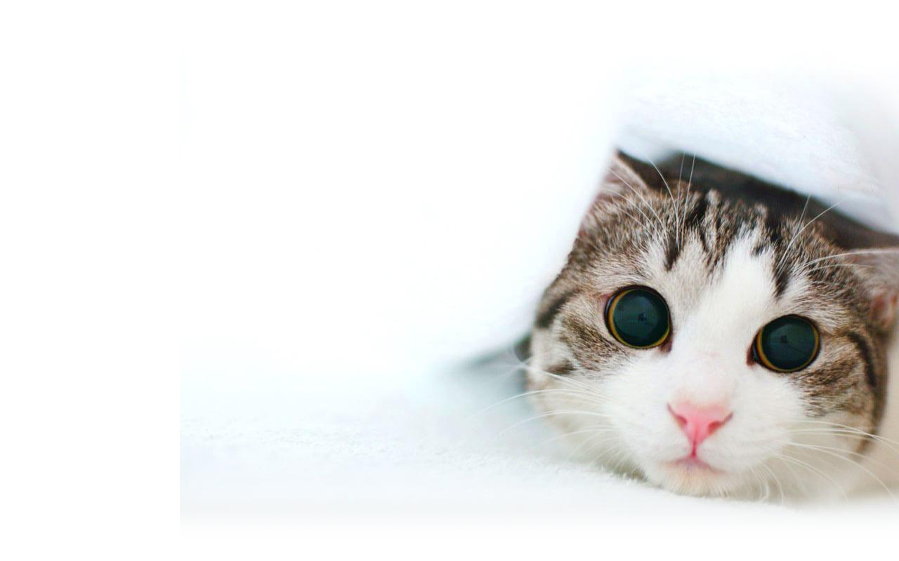Bts 3d Wallpaper Cat White Backgrounds Wallpaper Cave