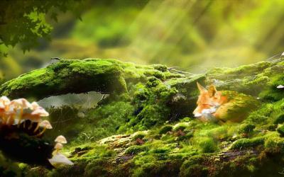 Relaxing Desktop Backgrounds - Wallpaper Cave