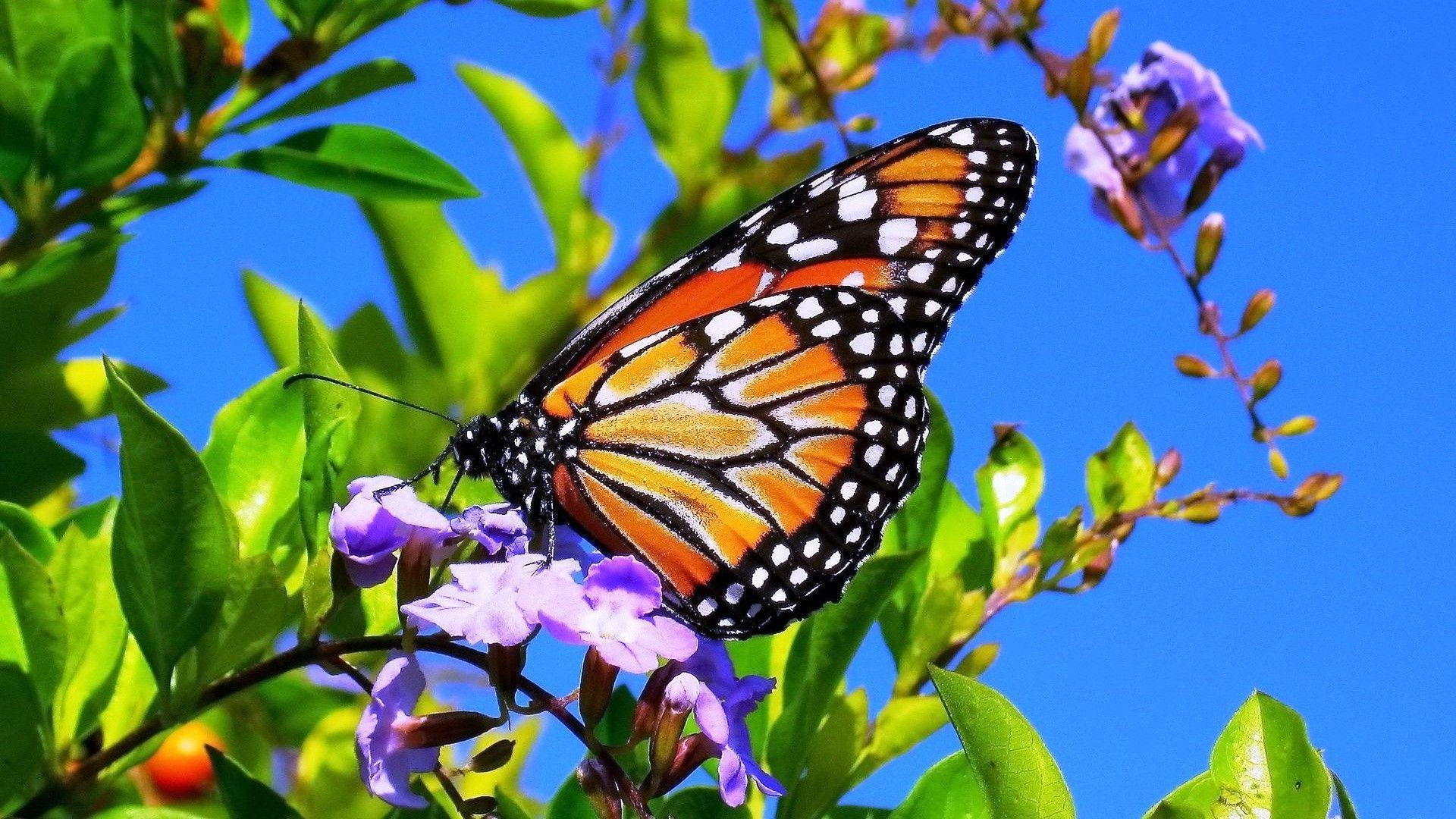 Beautiful Pictures Of Flowers And Butterflies Birds Butterfly And Flower Wallpapers Wallpaper Cave