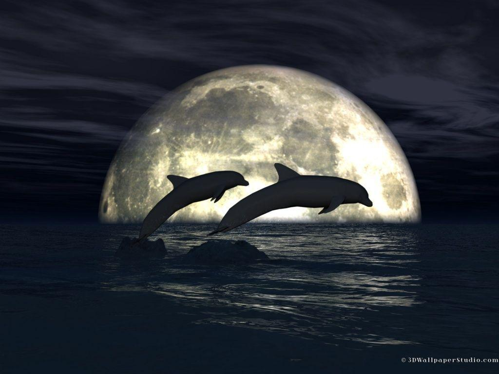 3d Dolphin Wallpaper For Windows 7 Free Dolphin Desktop Wallpapers Wallpaper Cave