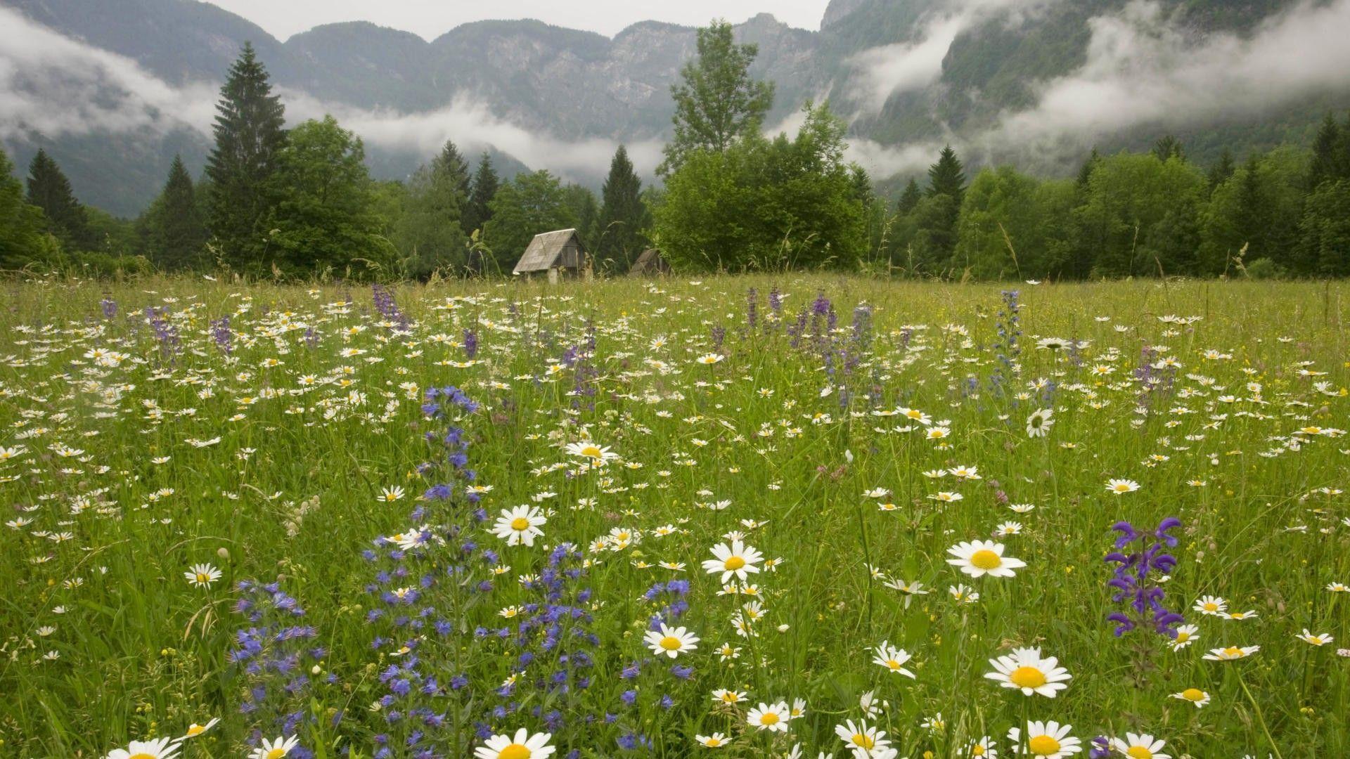 Best 3d Wallpaper Download App Spring Meadow Wallpapers Wallpaper Cave