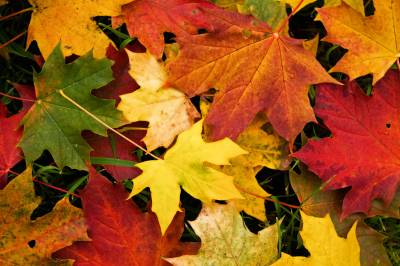 Wallpapers Fall Leaves - Wallpaper Cave