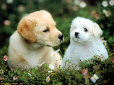 Cute Dogs And Puppies Wallpapers - Wallpaper Cave