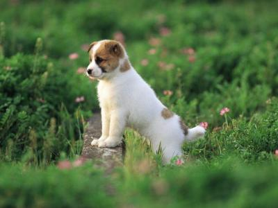 Cute Puppy Pictures Wallpapers - Wallpaper Cave