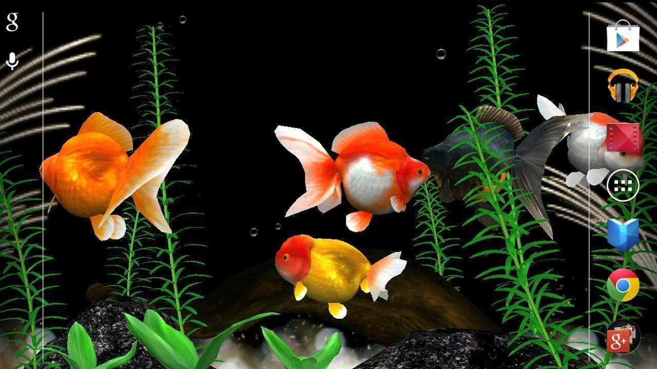 Cute Live Wallpapers For Android Apk Gold Fish Wallpapers Wallpaper Cave