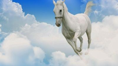 White Horse Wallpapers - Wallpaper Cave
