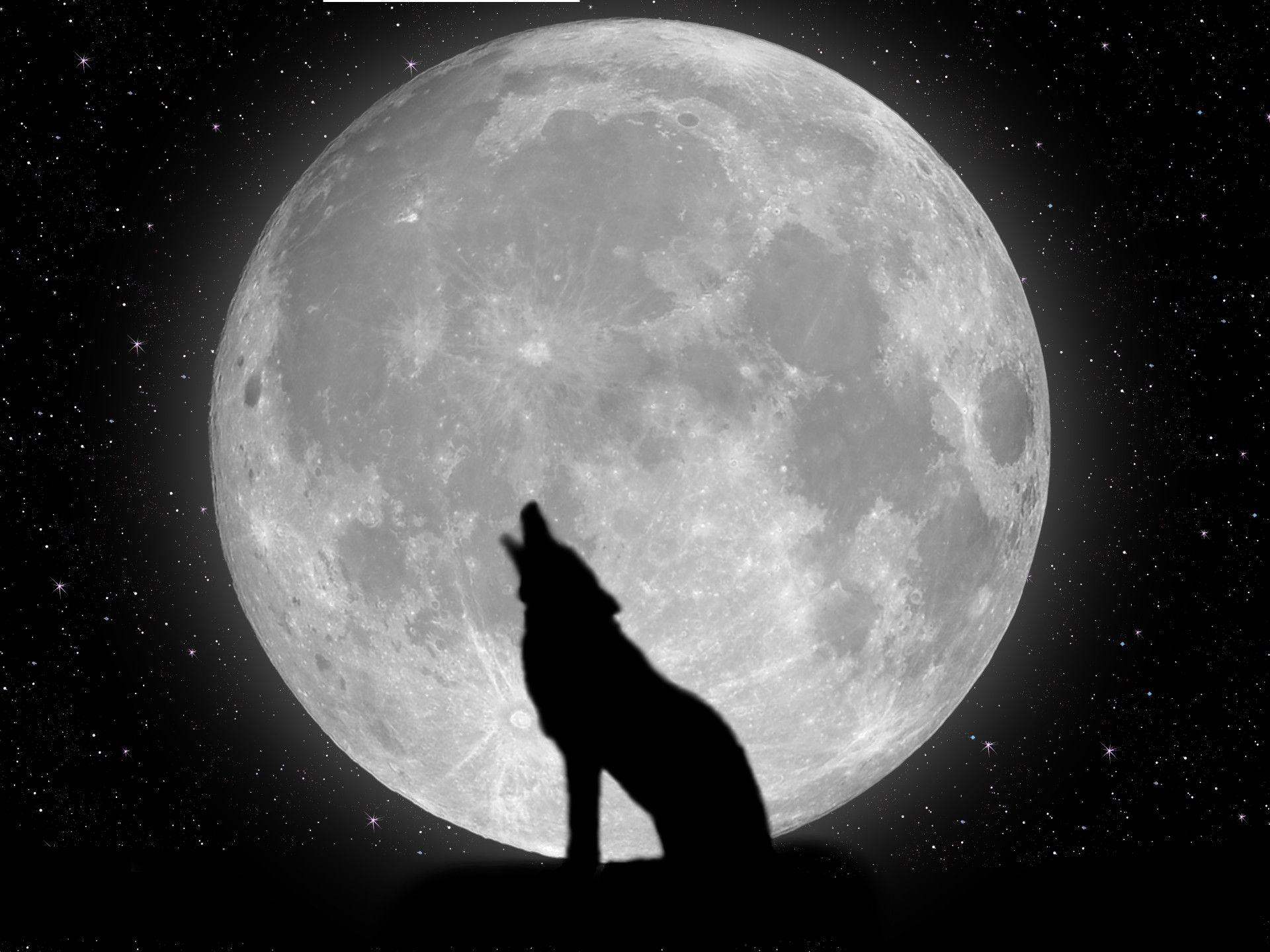 Black Wolf Wallpaper Wolf Wallpapers Hd Wallpaper Cave
