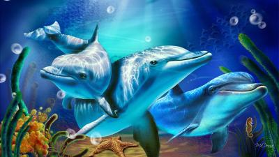 Free Dolphin Wallpapers For Desktop - Wallpaper Cave