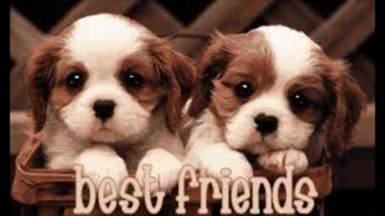 Cute Wallpapers Of Kittens And Puppies Best Friends Forever Wallpapers Wallpaper Cave