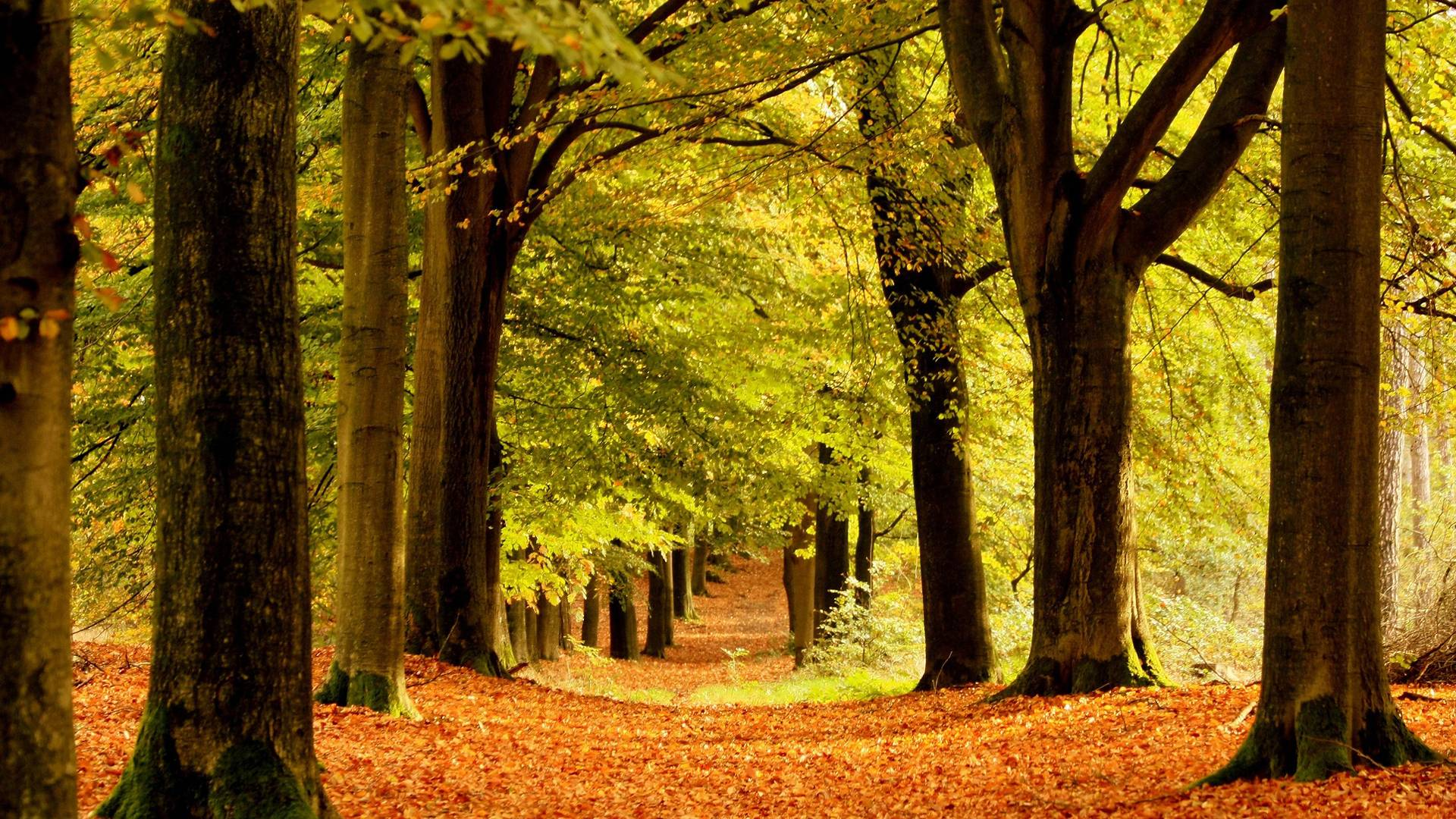 Fall Wallpaper With Deer Beautiful Forest Wallpapers Wallpaper Cave