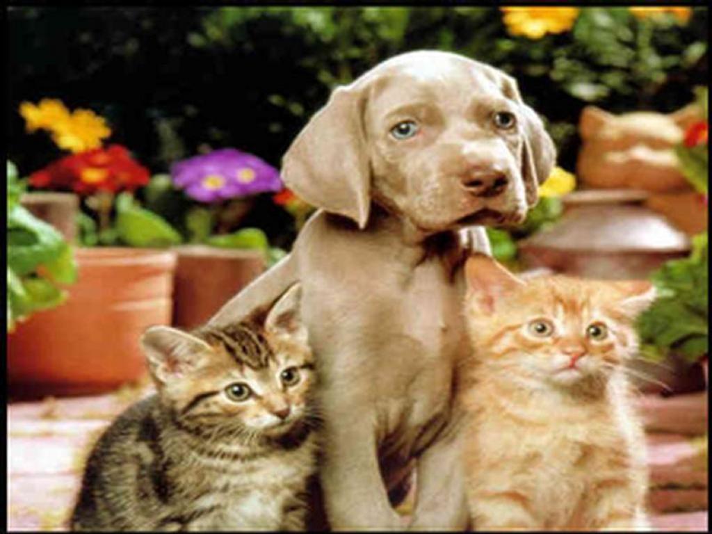 Cute Little Kitten Desktop Wallpapers Cats And Dogs Wallpapers Wallpaper Cave