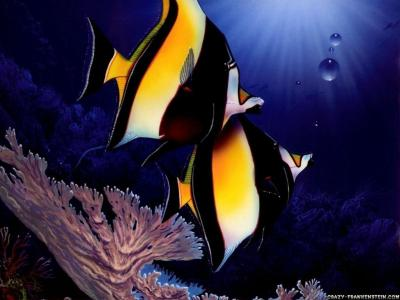 Cool Fish Backgrounds - Wallpaper Cave