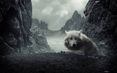 Cool Wolf Backgrounds - Wallpaper Cave