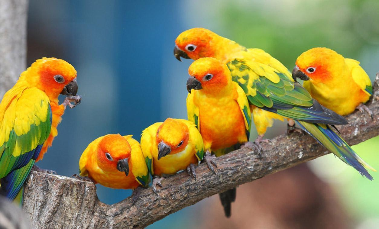 Cute Baby Pets Live Wallpaper Download Parakeet Wallpapers Wallpaper Cave