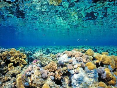 Coral Reef Backgrounds - Wallpaper Cave