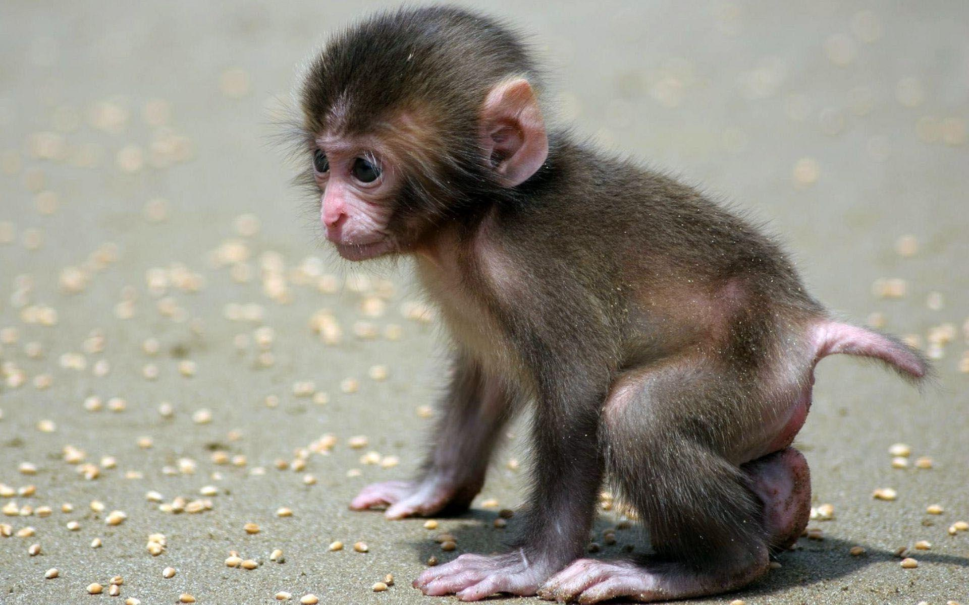 Cute Smiling Babies Wallpapers Baby Monkey Wallpapers Wallpaper Cave