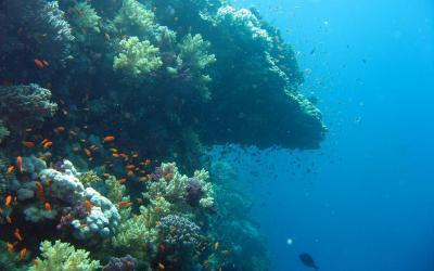 Under Ocean Wallpapers - Wallpaper Cave