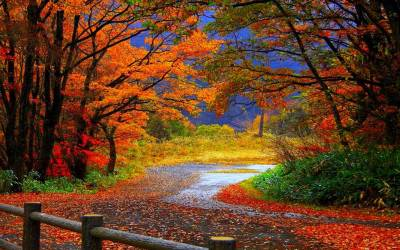 Fall Autumn Wallpapers - Wallpaper Cave