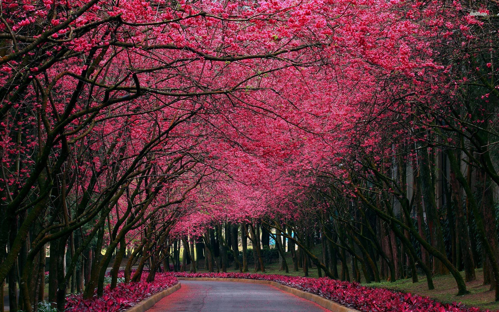 Cuadros Plateados Pink Tree Wallpapers - Wallpaper Cave