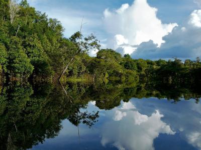 Amazon Rainforest Wallpapers - Wallpaper Cave