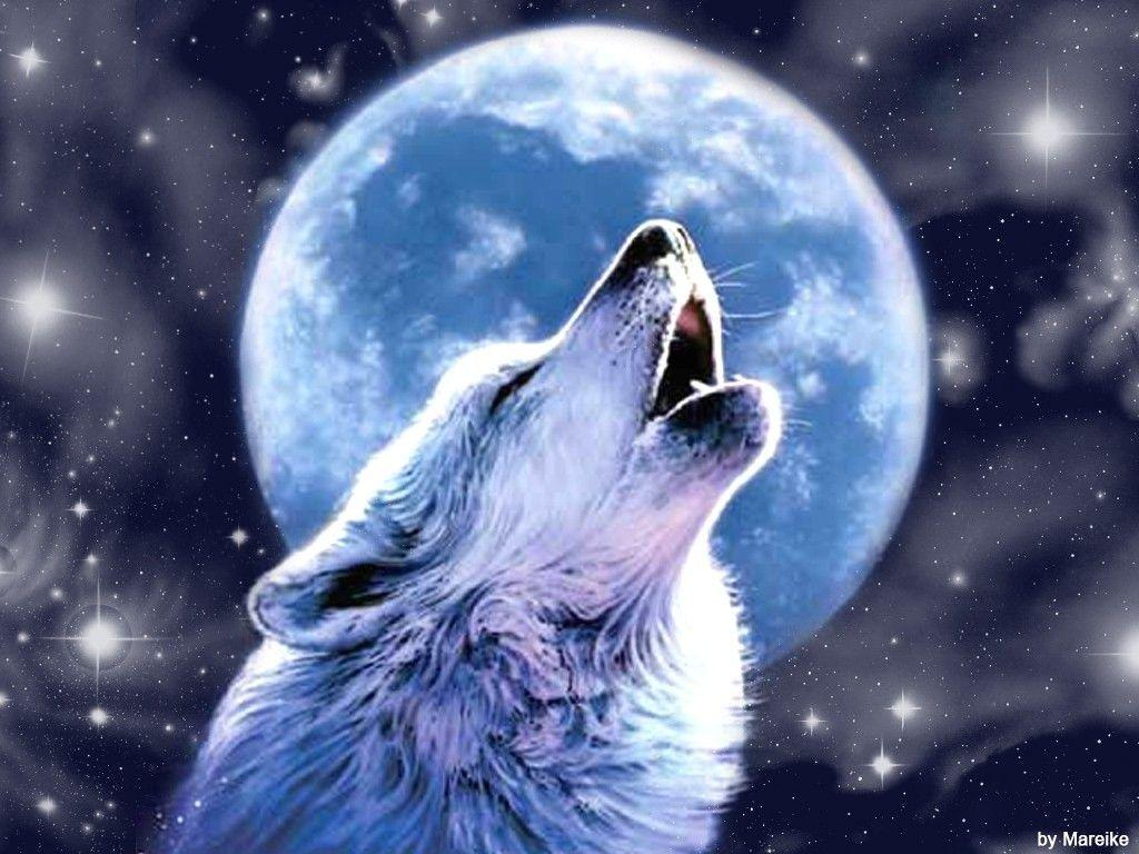 Coole Wolf Bilder Wolf Howling Wallpapers Wallpaper Cave