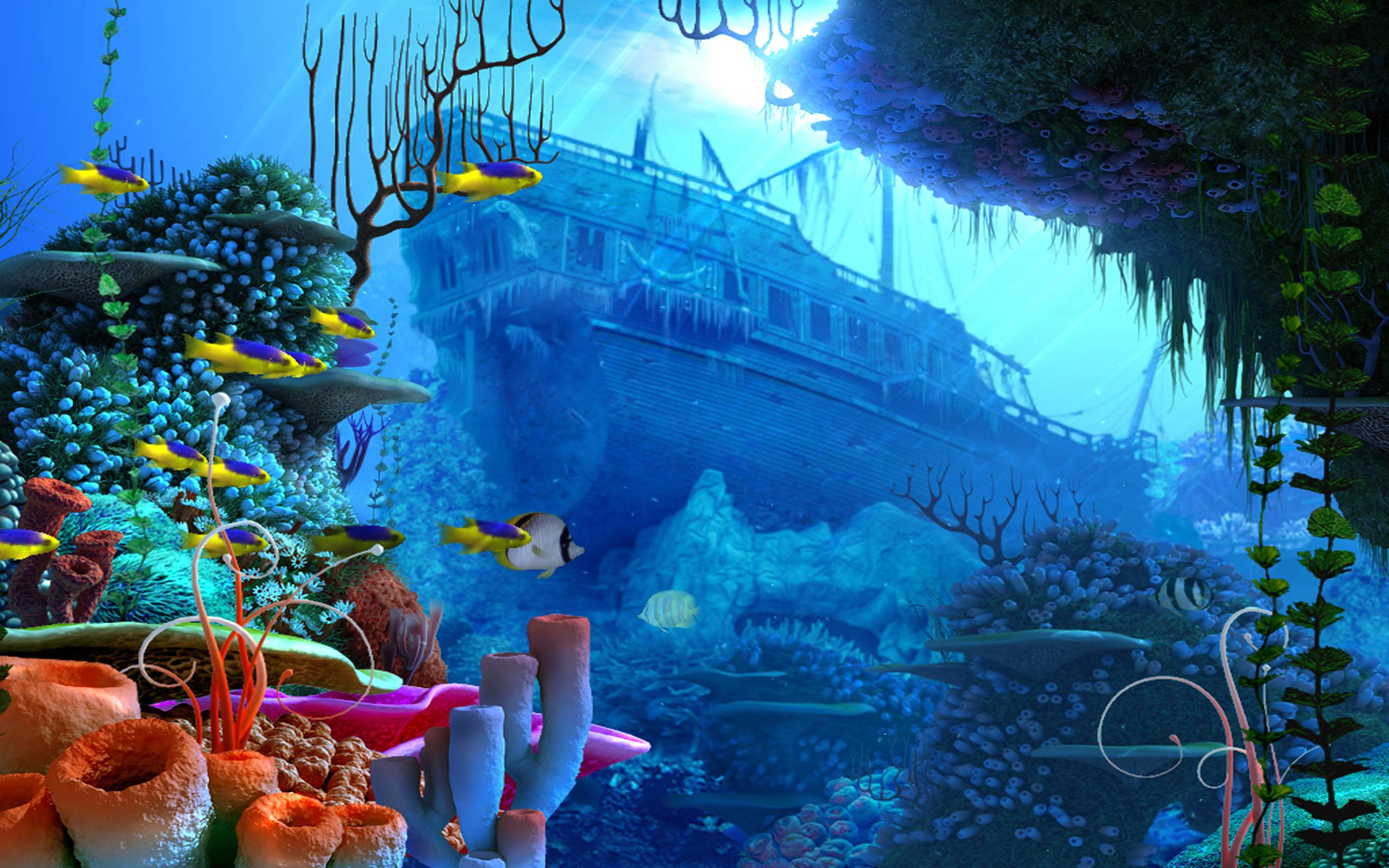 Coral Reef Wallpapers Wallpaper Cave
