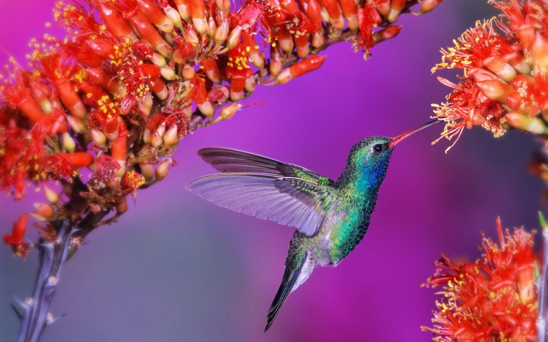 Geography Hd Wallpaper Free Hummingbird Wallpapers Wallpaper Cave