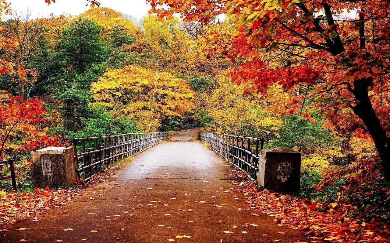 Fall High Definition Wallpapers Fall Wallpapers Wallpaper Cave