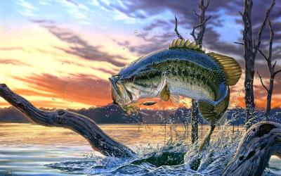 Bass Fishing Wallpaper Backgrounds - Wallpaper Cave