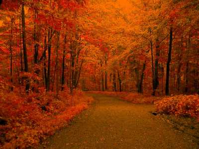 Fall Backgrounds Image - Wallpaper Cave