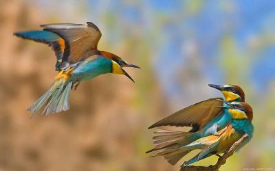 Wallpapers Birds - Wallpaper Cave