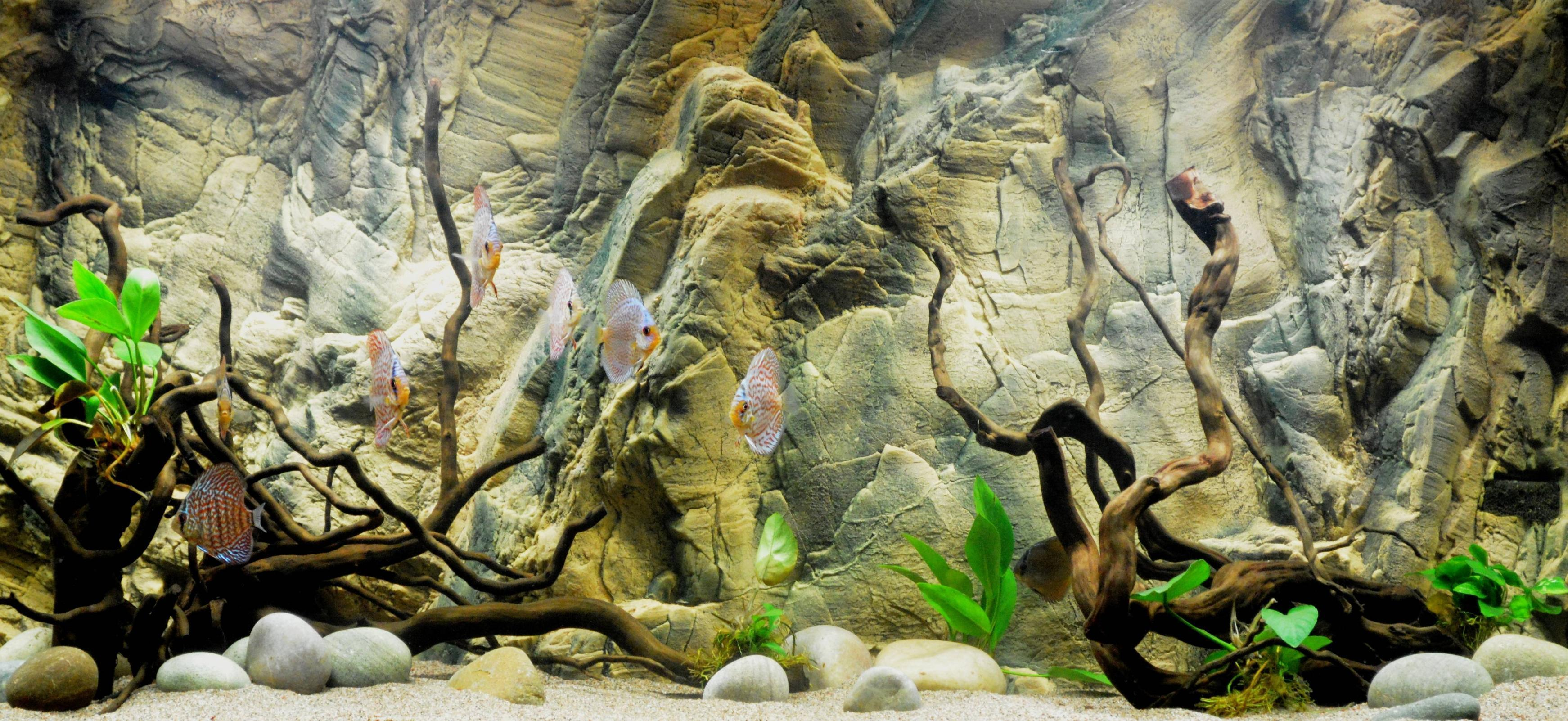 3d Fish Tank Wallpaper Aquarium Backgrounds Pictures Wallpaper Cave