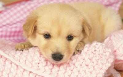 Puppy Wallpapers Free - Wallpaper Cave