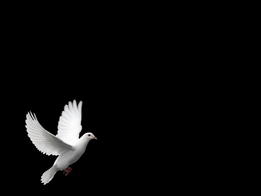 Animation Wallpaper Free Download For Android White Dove Wallpapers Wallpaper Cave