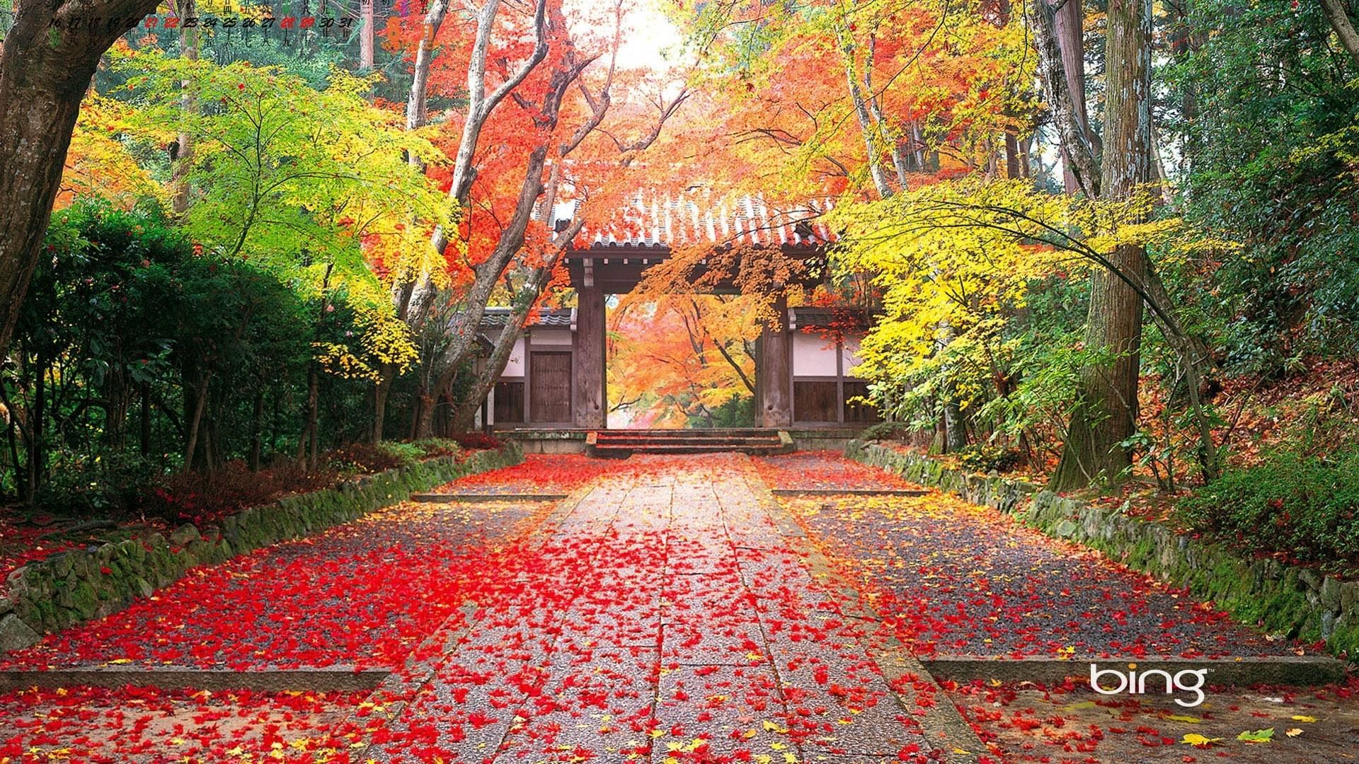 Wallpaper Pemandangan Musim Gugur