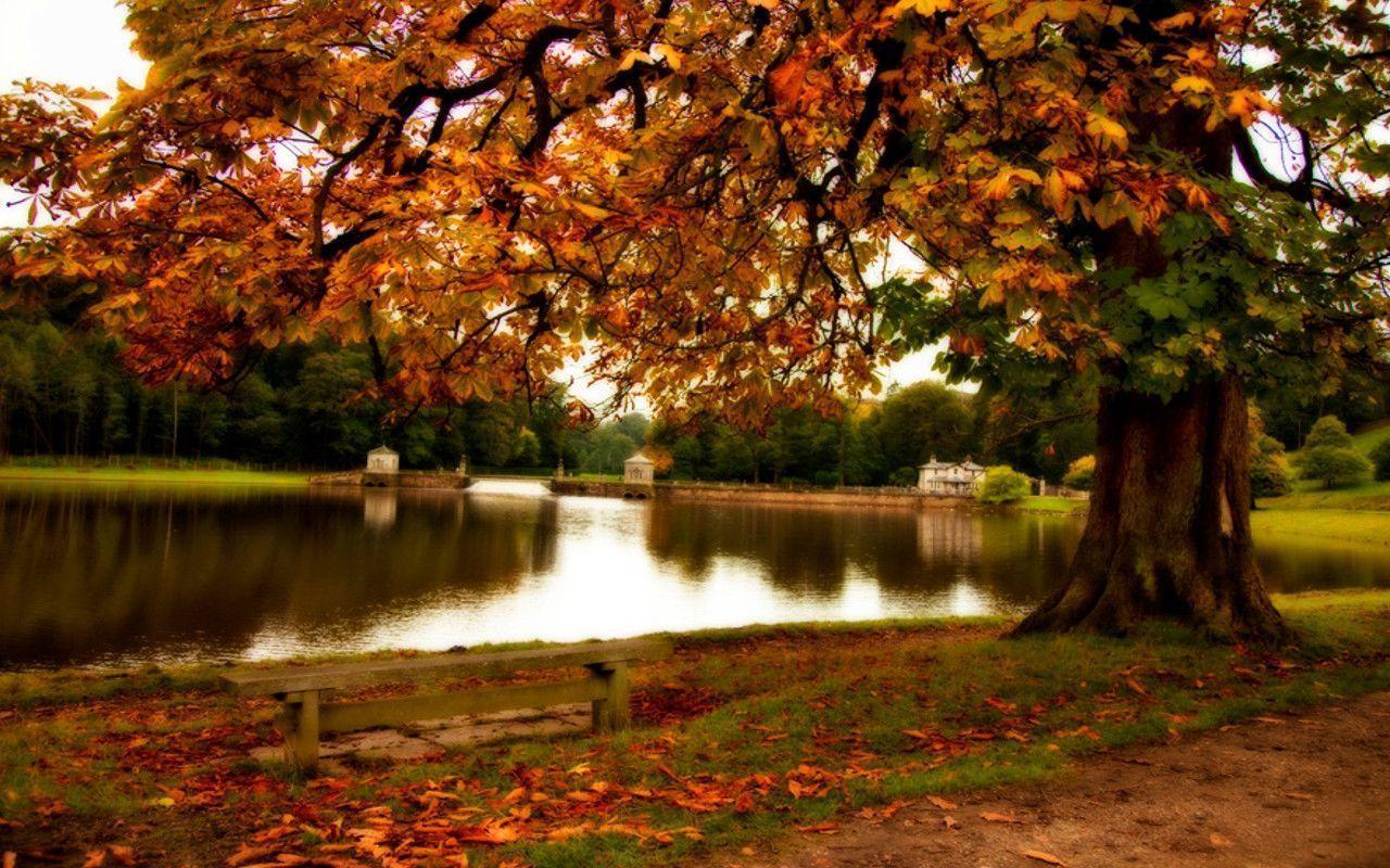 Central Park Fall Desktop Wallpaper Autumn Wallpapers Pictures Wallpaper Cave