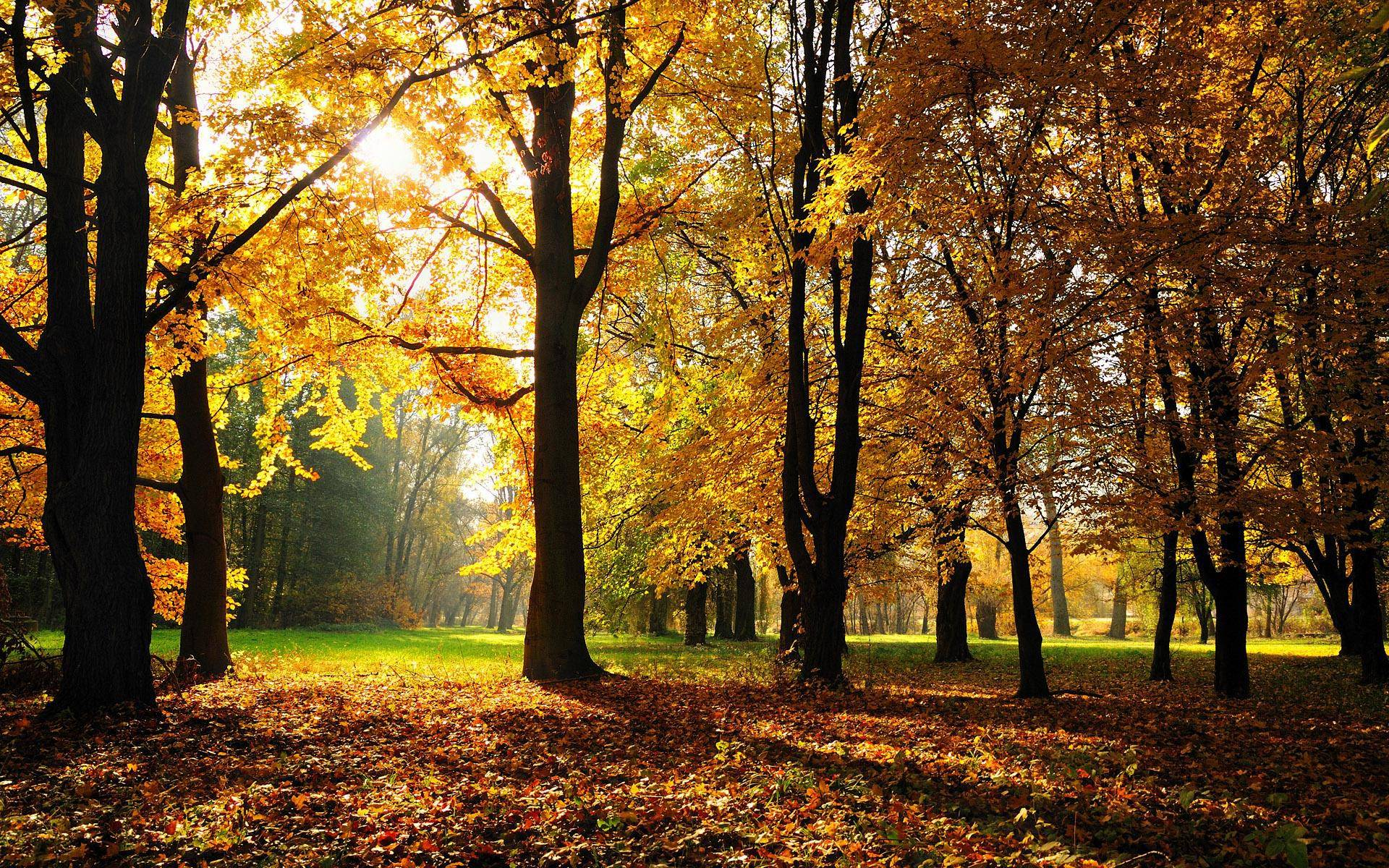 Dark Fall Android Wallpaper Autumn Backgrounds Wallpaper Cave