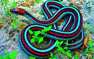 Cool Snake Wallpapers - Wallpaper Cave