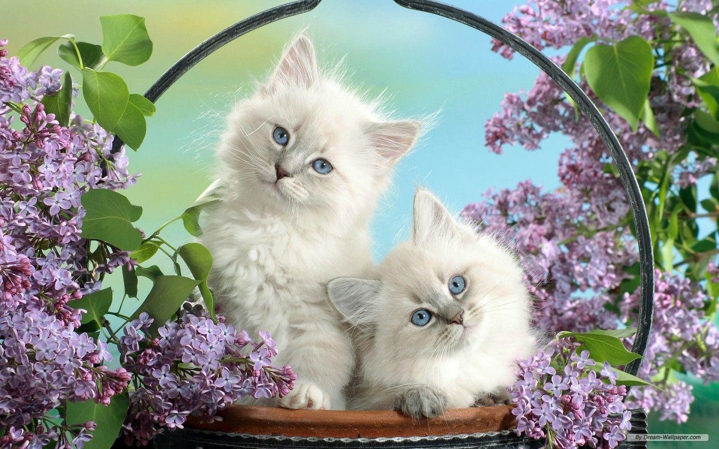 Animals free animal cute 380067 wallpapers online amazing