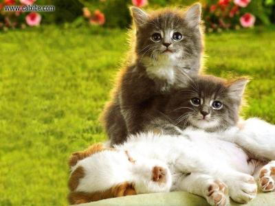 Puppies And Kittens Wallpapers - Wallpaper Cave