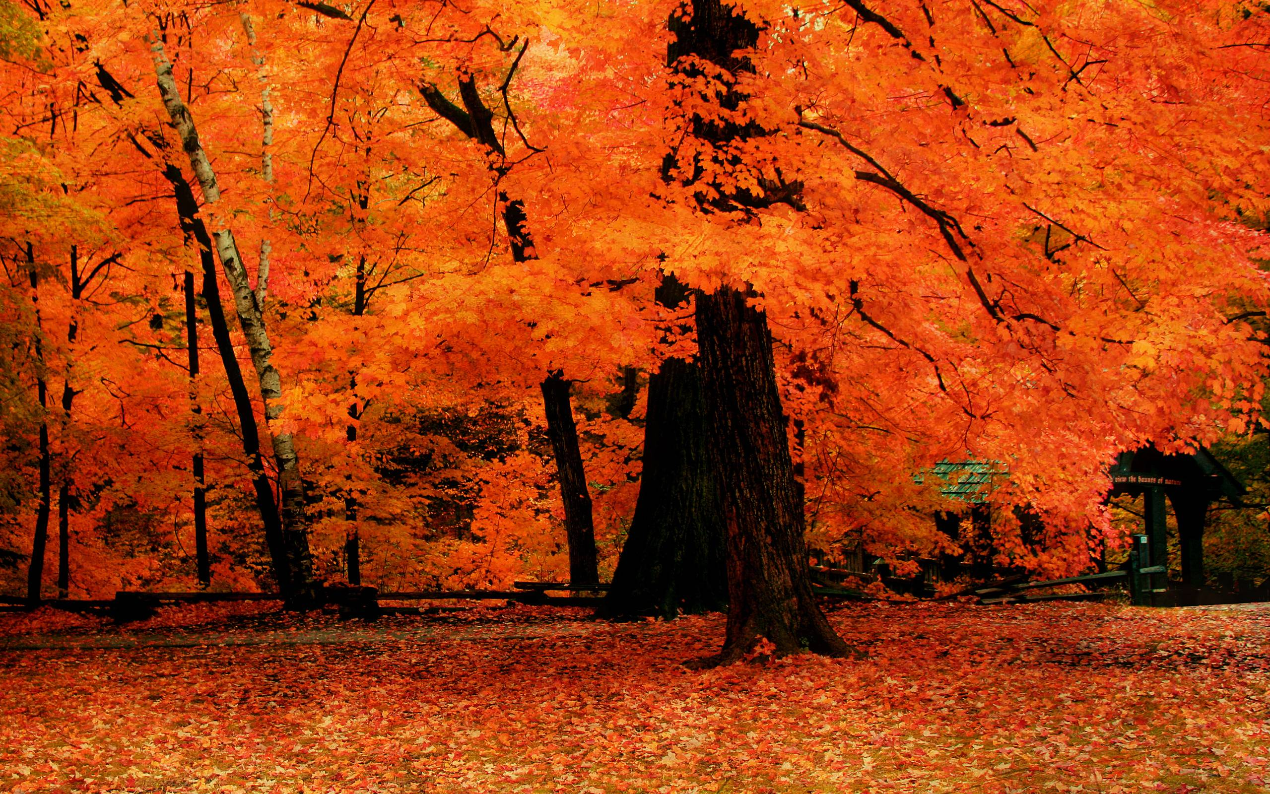 Upstate New York Fall Hd Wallpaper Fall Trees Wallpapers Wallpaper Cave