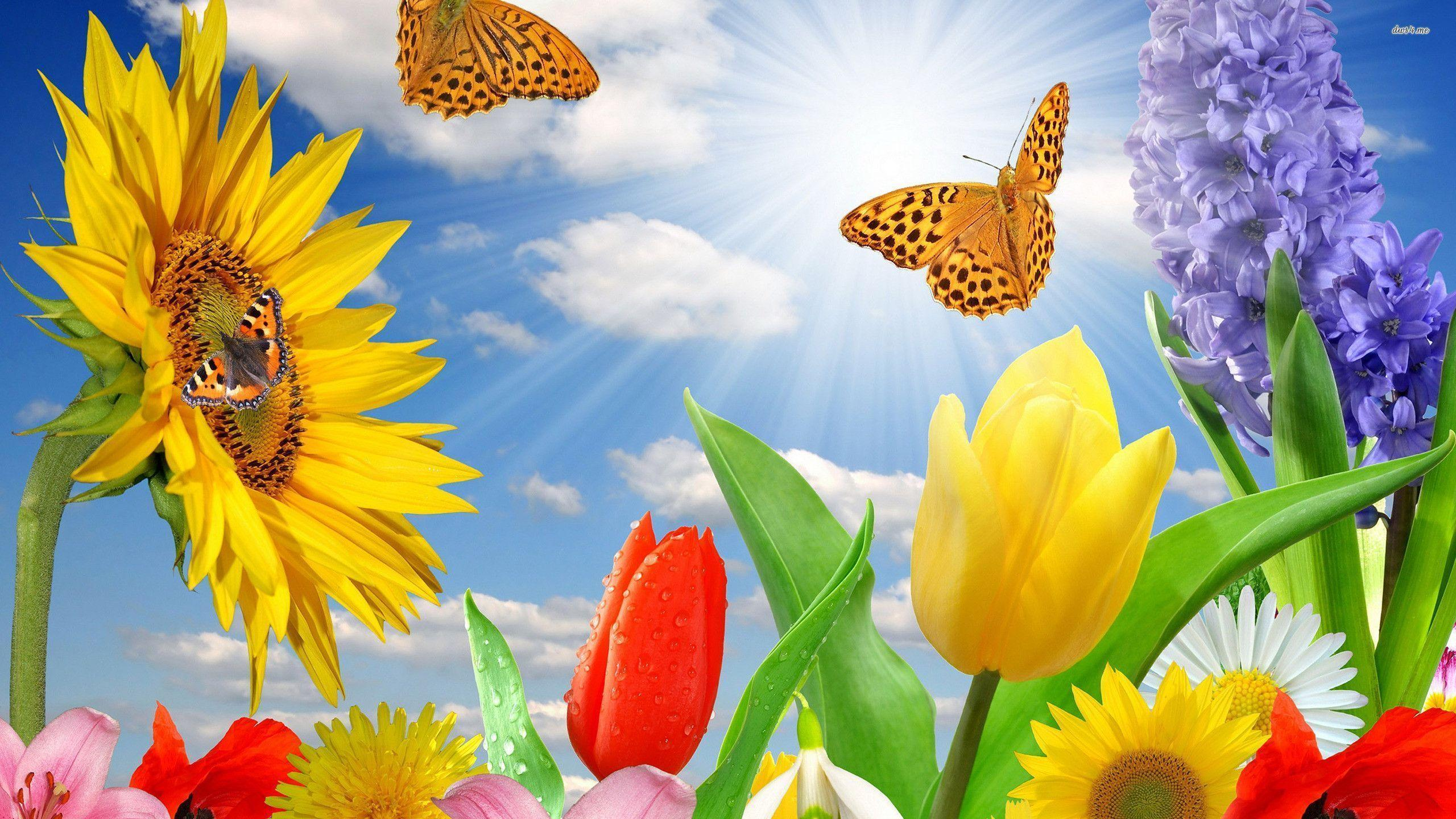 Beautiful Pictures Of Flowers And Butterflies Birds Butterflies Backgrounds Wallpaper Cave