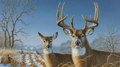 Whitetail Deer Backgrounds - Wallpaper Cave